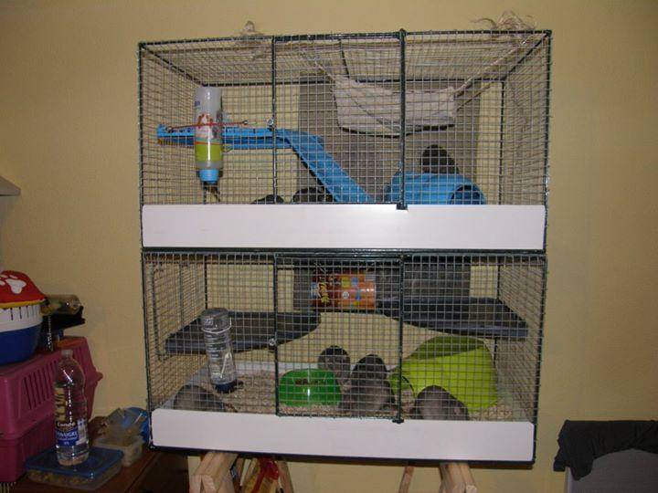 quelle cage choisir pour ses rats. Black Bedroom Furniture Sets. Home Design Ideas
