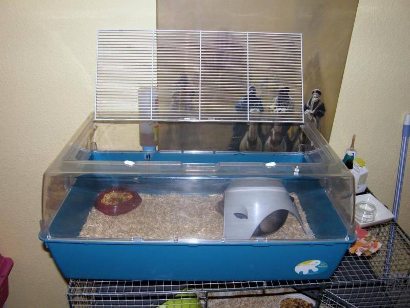 Cage quarantaine rat malade