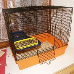 Cage pour vieux rat ou handicapé