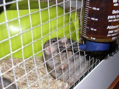 Infusion thym rat (Solstice)