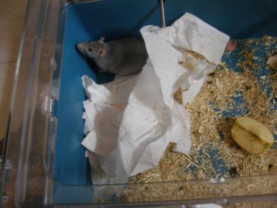 Biscotte et son nid