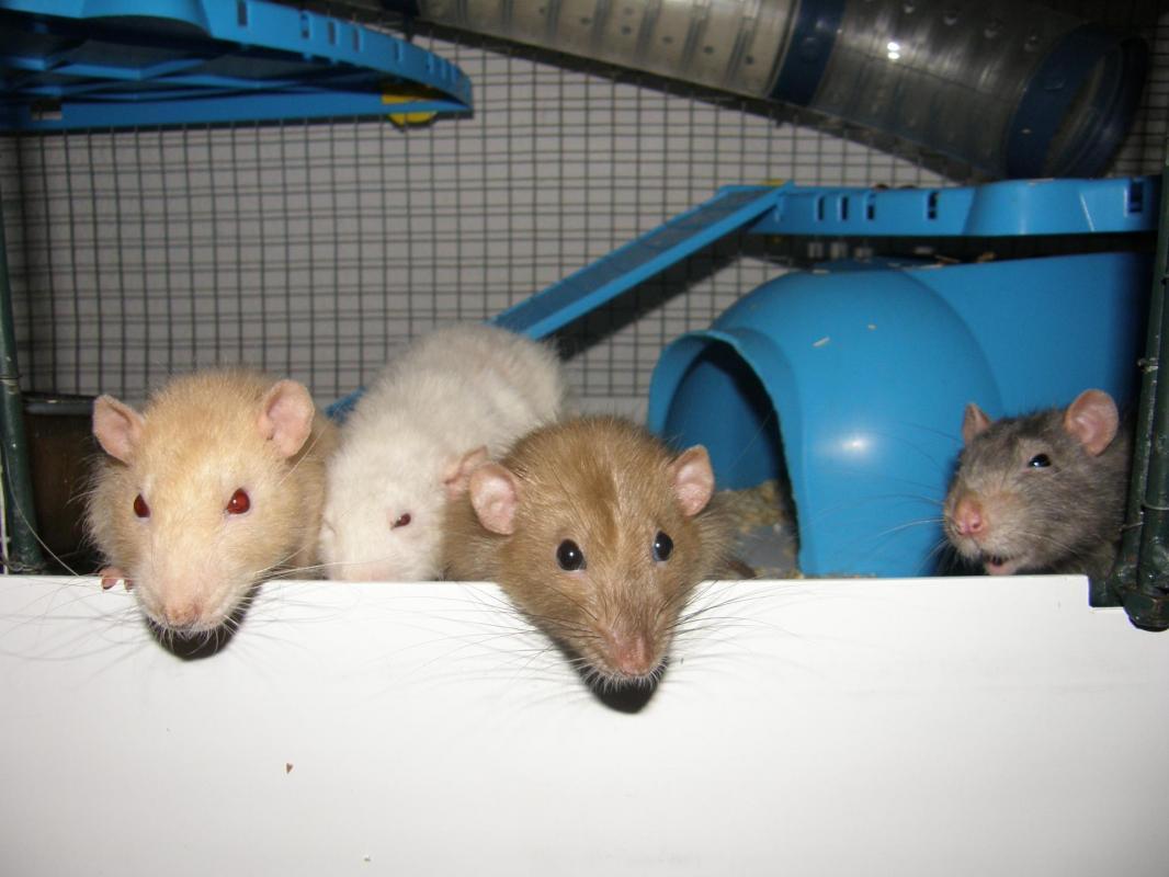 Aslan, Yuki, Léo et Pan