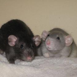 Cerise & Rosie